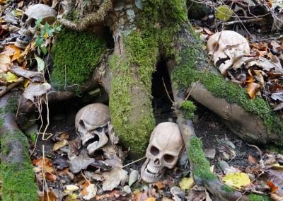 Mehrere Schädel in einem abgelegenen Waldstück